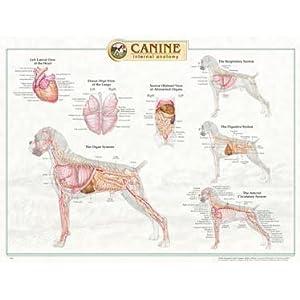 human organ anatomy chart organ chart canine anatomy organ chart